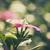 flor · florescimento · plantas · família · nativo · europa - foto stock © sweetcrisis