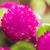 мира · бакалавр · кнопки · цветок · макроса - Сток-фото © sweetcrisis
