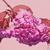 voorjaar · kersenbloesem · bruiloft · boom - stockfoto © szabiphotography