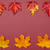 Autumn colorful fallen maple leaves in rows on claret background stock photo © szabiphotography