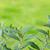 yaprakları · yeşil · ağaç · yaprak · meyve - stok fotoğraf © szabiphotography