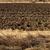 mezőgazdasági · mező · föld · föld · tavasz · kész - stock fotó © szabiphotography