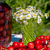 fresche · tavolo · in · legno · giardino · foglie · verdi - foto d'archivio © szabiphotography