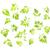 Spice · fresche · foglie · bianco · alimentare · luce - foto d'archivio © szefei