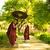 young buddhist novice monks stock photo © szefei
