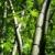 bamboo tree stock photo © szefei