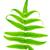 fern leaf stock photo © szefei