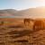 atlar · yeme · çim · göl · güzel · gündoğumu - stok fotoğraf © szefei