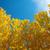 erdő · fenyőfa · eltorzult · halszem · lencse · természet - stock fotó © szefei