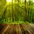 çam · ağacı · orman · zemin · kapalı · kuru - stok fotoğraf © szefei