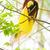 vadvilág · esőerdő · egzotikus · trópusi · madarak · madár - stock fotó © szefei