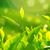緑茶 · フィールド · 葉 · ファーム · 作業 · ドリンク - ストックフォト © szefei