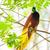faune · forêt · tropicale · exotique · tropicales · oiseaux · oiseau - photo stock © szefei