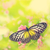 amarelo · vítreo · tigre · borboleta - foto stock © szefei