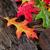 wet vibrant autumn leaves on driftwood stock photo © tab62
