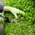 trimming hedges with manual shears stock photo © tab62