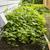 ogrodzenia · zielone · roślin · wiosną · trawy - zdjęcia stock © tab62