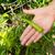 augmenté · organique · jardin · légumes - photo stock © tab62