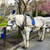 horse and cart in victoria canada stock photo © tab62