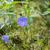 mor · çiçek · taze · sabah · çiy · su - stok fotoğraf © tab62