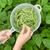 kezek · friss · zöldbab · kert · vízszintes · fotó - stock fotó © tab62