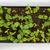 準備 · 弁当箱 · 利便性 · 高い · 栄養 · オレンジ - ストックフォト © tab62