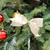 albero · di · natale · vacanze · ornamento · impiccagione · evergreen · ramo - foto d'archivio © tab62