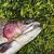 魚 · 虹 · トラウト · 浅い · 水 - ストックフォト © tab62