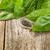 verde · basilico · fresche · isolato · bianco - foto d'archivio © tab62