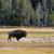 バイソン · モンタナ · 食べ · 草 · 風景 - ストックフォト © tab62