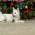 happy puppy dog laying in front of christmas tree during the hol stock photo © tab62