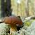 floresta · cogumelo · árvore · luz · fundo · verão - foto stock © taden