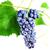 taze · üzüm · yaprakları · yalıtılmış · doğa - stok fotoğraf © taden
