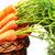 fresh carrot stock photo © taden
