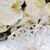 branco · orquídeas · janela · flor · natureza · beleza - foto stock © taden