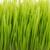 свежие · трава · изолированный · цветок · весны - Сток-фото © taden