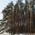 winter landscape stock photo © taden