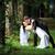 невеста · жених · белое · платье · зеленый · деревья · цветок - Сток-фото © taden