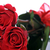 red roses close up stock photo © taden