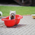 Cute · белый · щенков · собака · трава · цветы - Сток-фото © taden