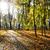 folha · cair · parque · ensolarado · outono · dia - foto stock © taden
