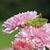 кузнечик · трава · животного · ошибка · исследований · антенна - Сток-фото © taden