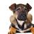 коричневая · собака · волос · животные · студию · красивой · домашние - Сток-фото © taden