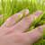 hand touch grass stock photo © taden