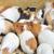Gine · domuzlar · portre · beyaz · genç · hayvan - stok fotoğraf © taden