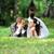 пару · лежать · вниз · трава · точки - Сток-фото © taden