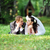 groom and bride stock photo © taden
