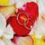 citromsárga · rózsa · virág · szirmok · fehér - stock fotó © taden