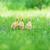 Pasen · kuikens · gras · bloemen · blauwe · hemel · bloem - stockfoto © taden