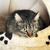 szürke · csíkos · macska · fiatal · imádnivaló · aranyos - stock fotó © taden